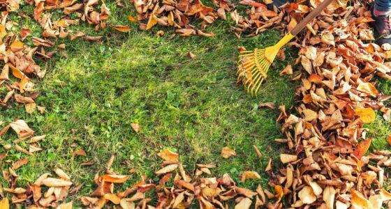 Herbstlaub wird auf einer Wiese zusammengekehrt.